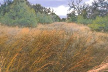 Bluestem Field